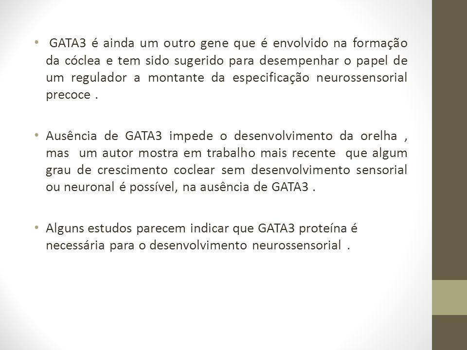 GATA3 é ainda um outro gene que é envolvido na formação da cóclea e tem sido sugerido para desempenhar o papel de um regulador a montante da especificação neurossensorial precoce.