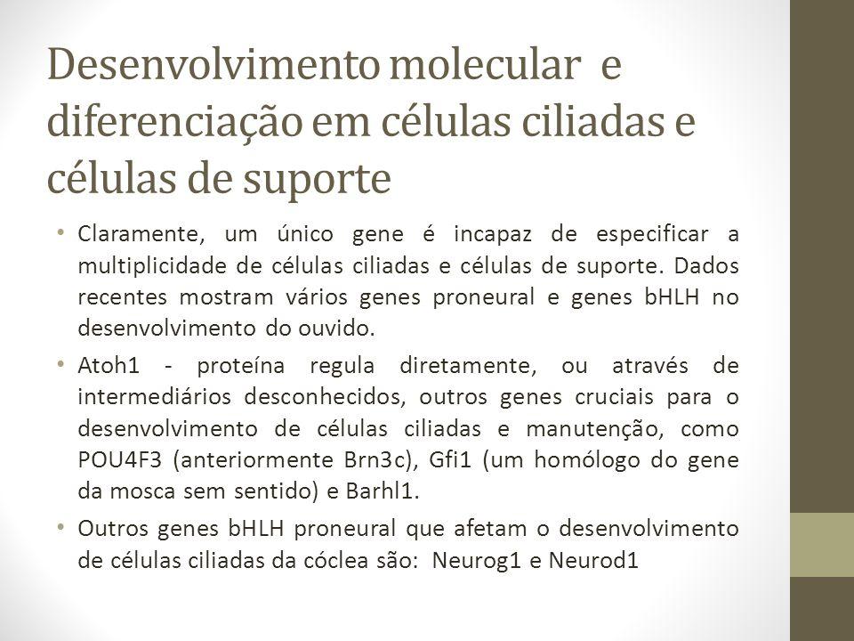 Desenvolvimento molecular e diferenciação em células ciliadas e células de suporte Claramente, um único gene é incapaz de especificar a multiplicidade de células ciliadas e células de suporte.