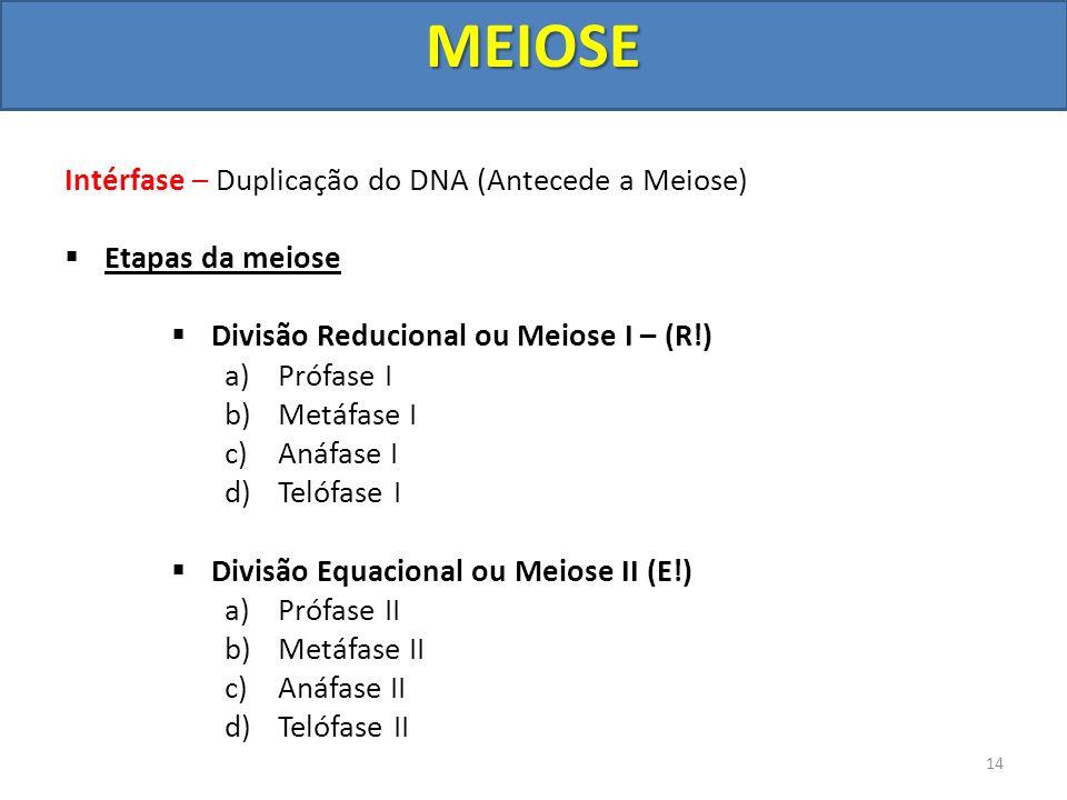 Intérfase – Duplicação do DNA (Antecede a Meiose) Etapas da meiose Divisão Reducional ou Meiose I – (R!) a)Prófase I b)Metáfase I c)Anáfase I d)Telófa