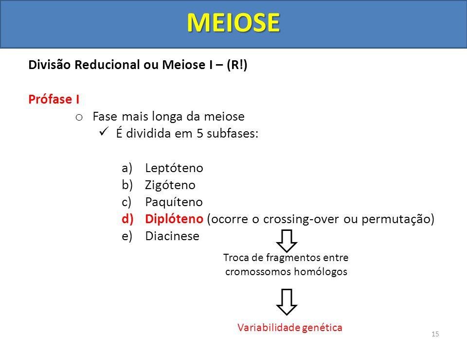 Divisão Reducional ou Meiose I – (R!) Prófase I o Fase mais longa da meiose É dividida em 5 subfases: a)Leptóteno b)Zigóteno c)Paquíteno d)Diplóteno (