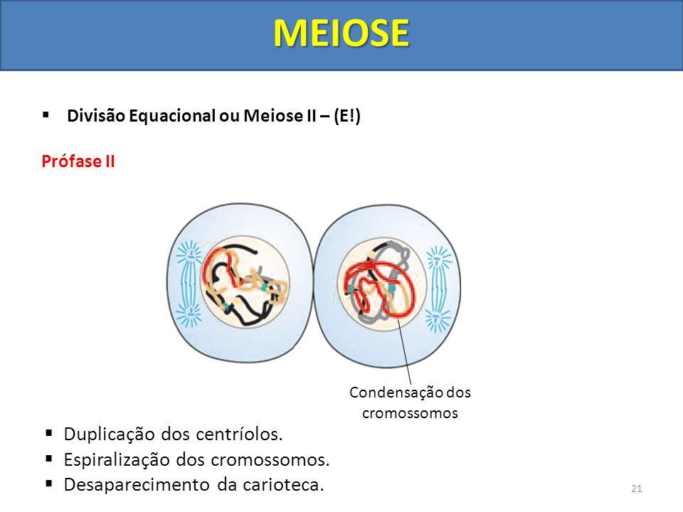 Divisão Equacional ou Meiose II – (E!) Prófase II Duplicação dos centríolos. Espiralização dos cromossomos. Desaparecimento da carioteca. Condensação