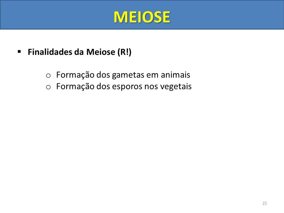 Finalidades da Meiose (R!) o Formação dos gametas em animais o Formação dos esporos nos vegetais 25 MEIOSE