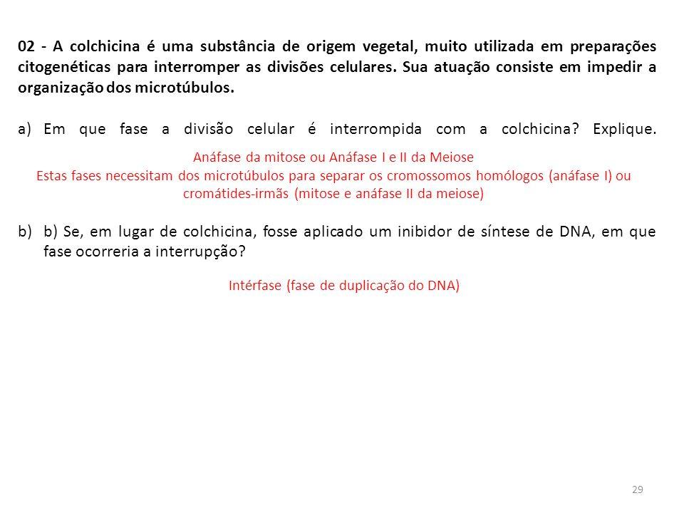 INTERFASE QUE PRECEDE A DIVISÃO 02 - A colchicina é uma substância de origem vegetal, muito utilizada em preparações citogenéticas para interromper as