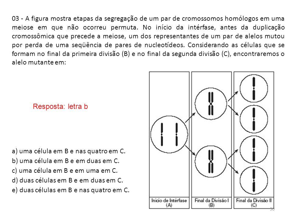 INTERFASE QUE PRECEDE A DIVISÃO 03 - A figura mostra etapas da segregação de um par de cromossomos homólogos em uma meiose em que não ocorreu permuta.