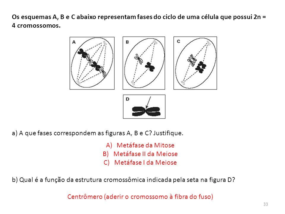 INTERFASE QUE PRECEDE A DIVISÃO Os esquemas A, B e C abaixo representam fases do ciclo de uma célula que possui 2n = 4 cromossomos. a) A que fases cor
