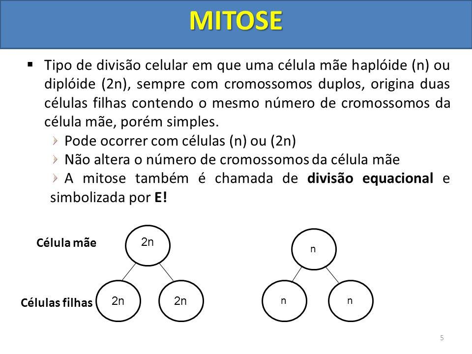 Tipo de divisão celular em que uma célula mãe haplóide (n) ou diplóide (2n), sempre com cromossomos duplos, origina duas células filhas contendo o mes
