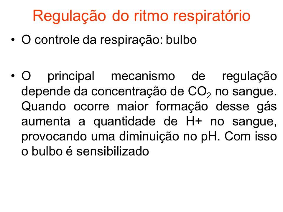 Regulação do ritmo respiratório O controle da respiração: bulbo O principal mecanismo de regulação depende da concentração de CO 2 no sangue. Quando o