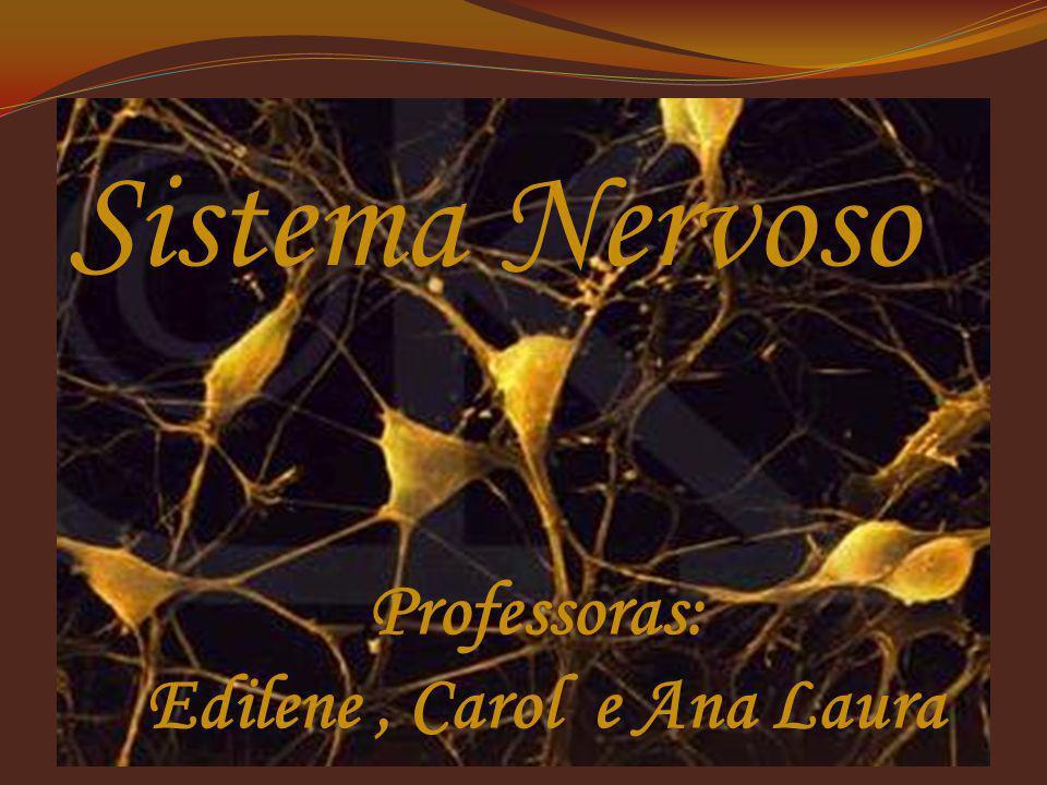 Sistema Nervoso Professoras: Edilene, Carol e Ana Laura