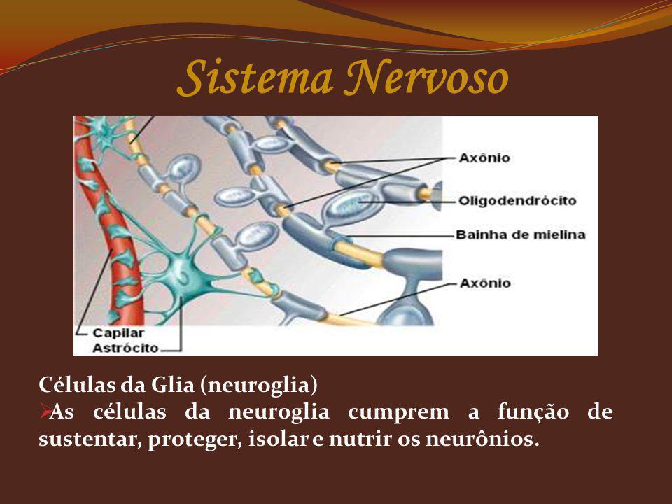 Células da Glia (neuroglia) As células da neuroglia cumprem a função de sustentar, proteger, isolar e nutrir os neurônios. Sistema Nervoso