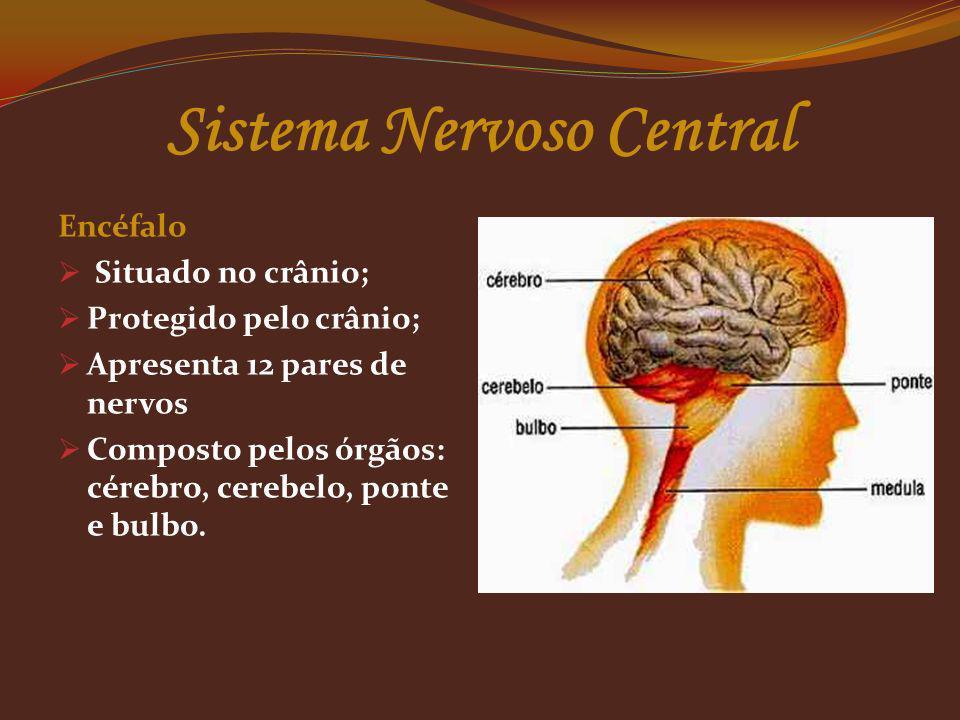Sistema Nervoso Central Encéfalo Situado no crânio; Protegido pelo crânio; Apresenta 12 pares de nervos Composto pelos órgãos: cérebro, cerebelo, pont