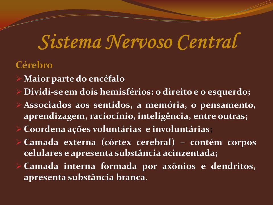 Sistema Nervoso Central Cérebro Maior parte do encéfalo Dividi-se em dois hemisférios: o direito e o esquerdo; Associados aos sentidos, a memória, o p