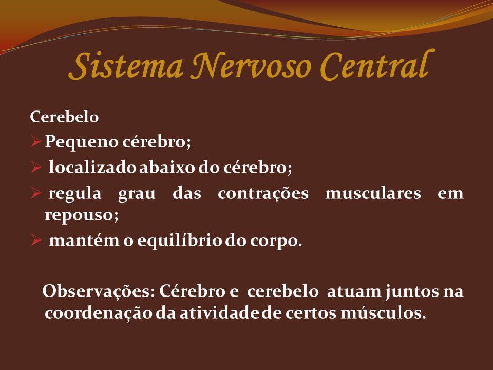 Cerebelo Pequeno cérebro; localizado abaixo do cérebro; regula grau das contrações musculares em repouso; mantém o equilíbrio do corpo. Observações: C