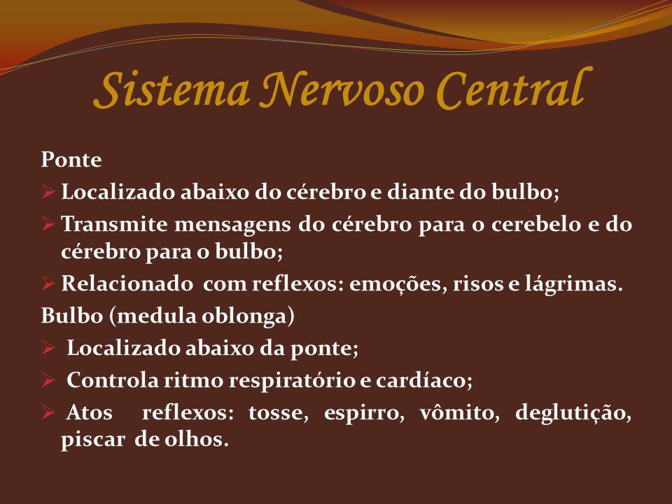 Ponte Localizado abaixo do cérebro e diante do bulbo; Transmite mensagens do cérebro para o cerebelo e do cérebro para o bulbo; Relacionado com reflex