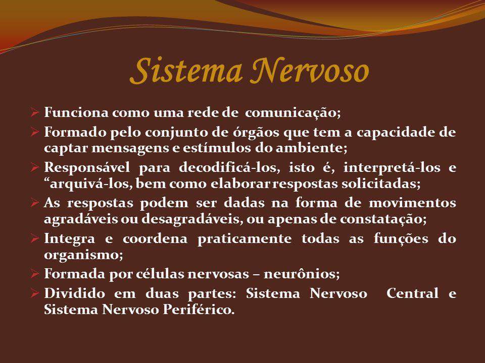 Sistema Nervoso Funciona como uma rede de comunicação; Formado pelo conjunto de órgãos que tem a capacidade de captar mensagens e estímulos do ambient