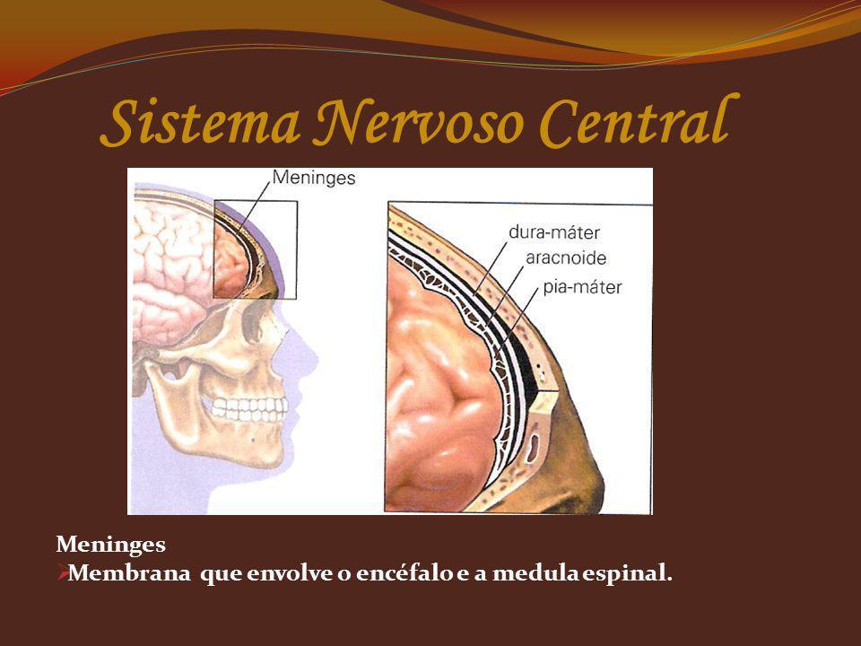 Meninges Membrana que envolve o encéfalo e a medula espinal.