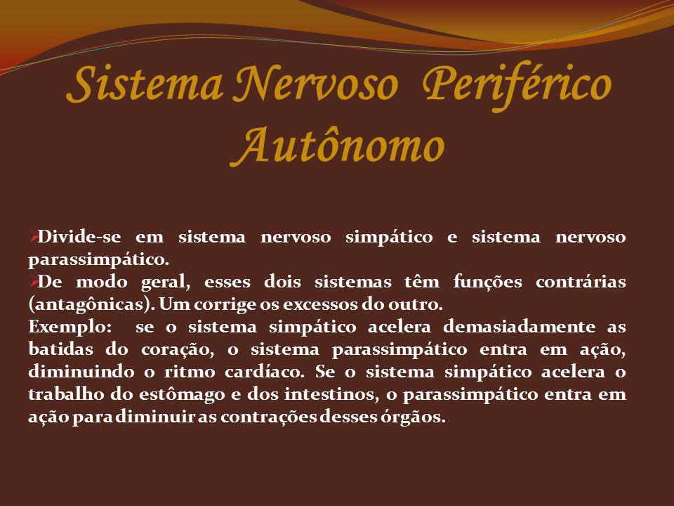 Divide-se em sistema nervoso simpático e sistema nervoso parassimpático. De modo geral, esses dois sistemas têm funções contrárias (antagônicas). Um c