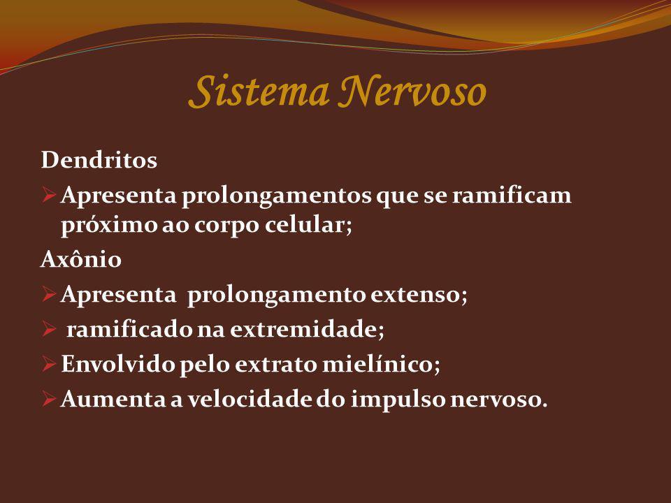 Com base na sua estrutura e função, o sistema nervoso periférico pode ainda subdividir-se em duas partes: o sistema nervoso somático e o sistema nervoso autônomo; As ações voluntárias resultam da contração de músculos estriados esqueléticos, que estão sob o controle do sistema nervoso periférico voluntário ou somático; Já as ações involuntárias resultam da contração das musculaturas lisa e cardíaca, controladas pelo sistema nervoso periférico autônomo, também chamado involuntário.