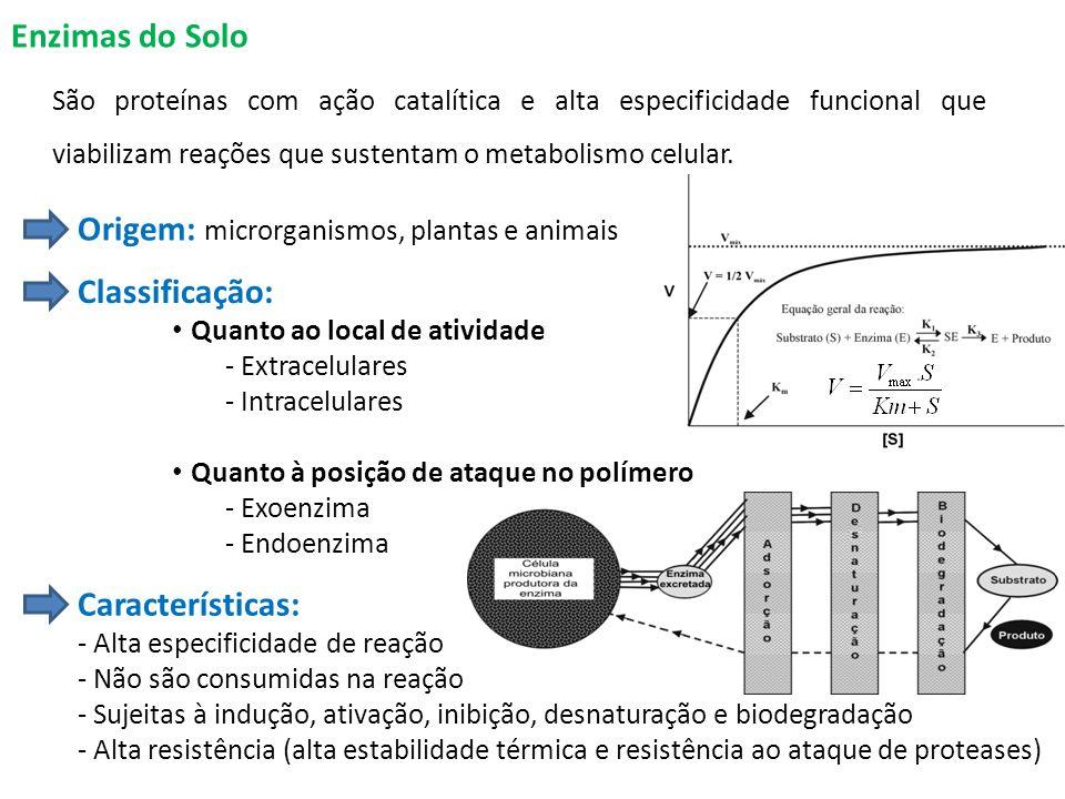 Enzimas do Solo São proteínas com ação catalítica e alta especificidade funcional que viabilizam reações que sustentam o metabolismo celular.