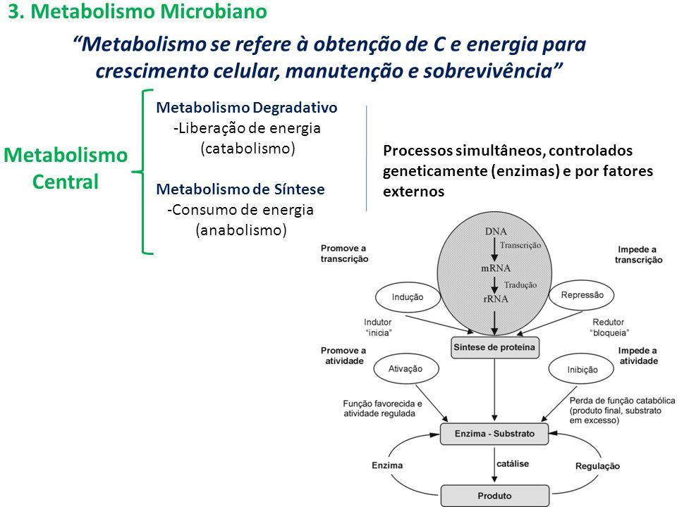3. Metabolismo Microbiano Metabolismo se refere à obtenção de C e energia para crescimento celular, manutenção e sobrevivência Metabolismo Central Met