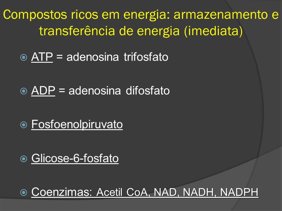 Compostos ricos em energia: armazenamento e transferência de energia (imediata) ATP = adenosina trifosfato ADP = adenosina difosfato Fosfoenolpiruvato Glicose-6-fosfato : Acetil CoA, NAD, NADH, NADPH Coenzimas: Acetil CoA, NAD, NADH, NADPH