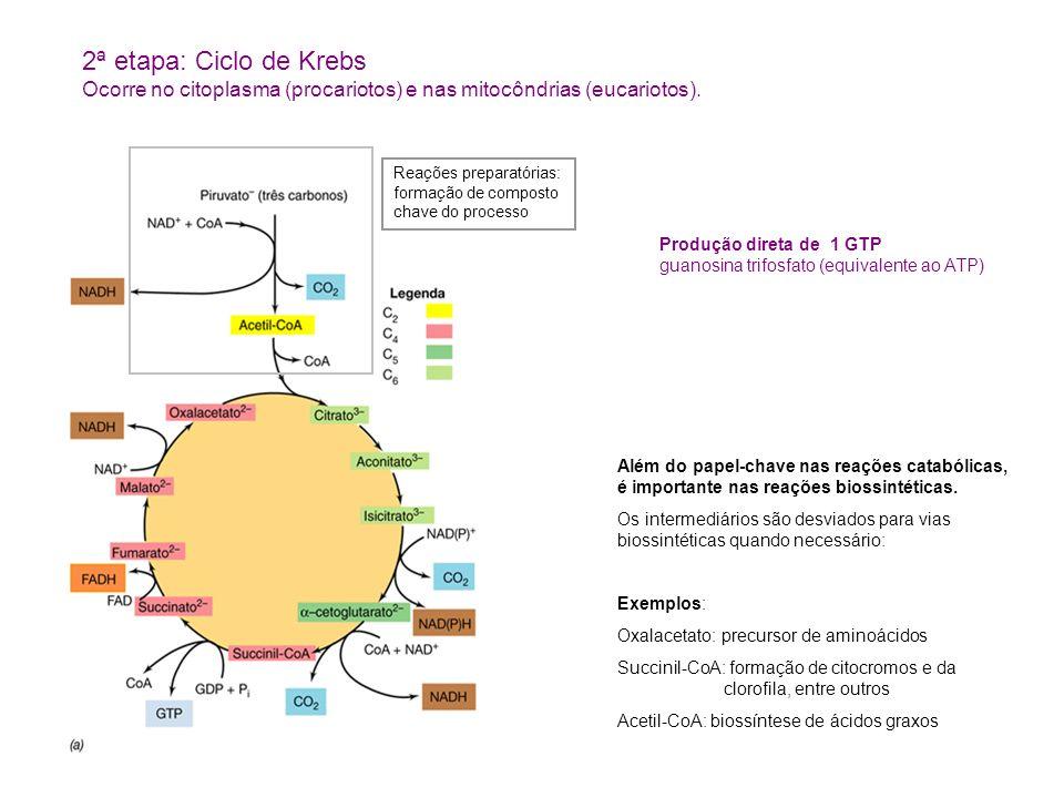 Produção direta de 1 GTP guanosina trifosfato (equivalente ao ATP) Além do papel-chave nas reações catabólicas, é importante nas reações biossintéticas.