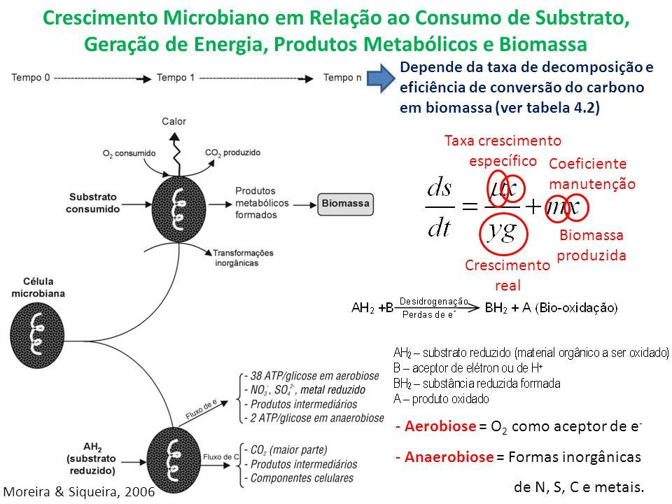 Crescimento Microbiano em Relação ao Consumo de Substrato, Geração de Energia, Produtos Metabólicos e Biomassa Taxa crescimento específico Biomassa produzida Crescimento real - Aerobiose = O 2 como aceptor de e - - Anaerobiose = Formas inorgânicas de N, S, C e metais.