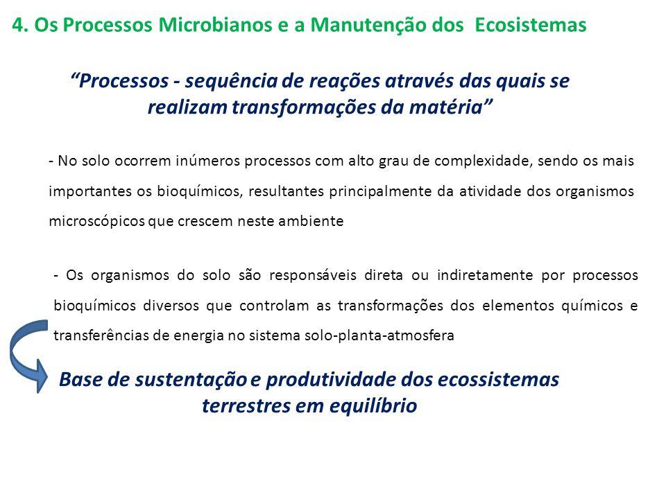 4. Os Processos Microbianos e a Manutenção dos Ecosistemas - Os organismos do solo são responsáveis direta ou indiretamente por processos bioquímicos