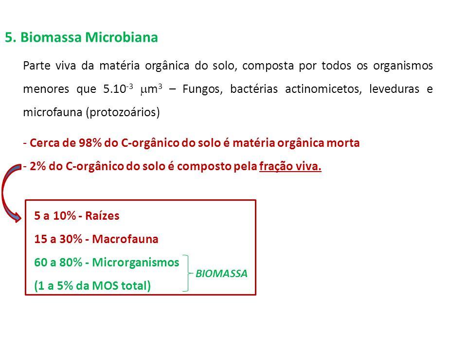 5. Biomassa Microbiana Parte viva da matéria orgânica do solo, composta por todos os organismos menores que 5.10 -3 m 3 – Fungos, bactérias actinomice
