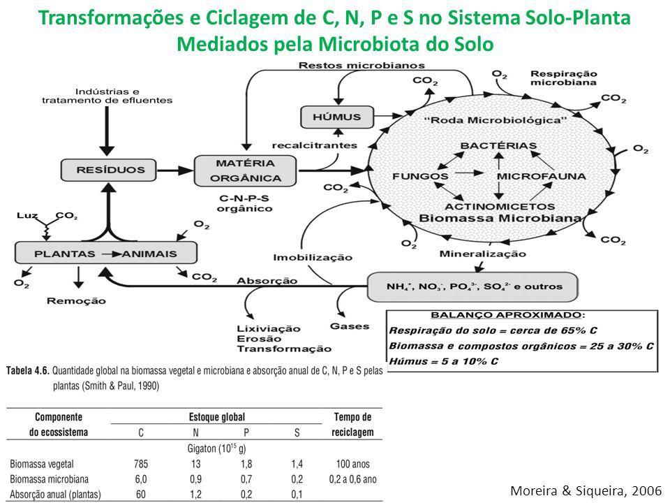 Moreira & Siqueira, 2006 Transformações e Ciclagem de C, N, P e S no Sistema Solo-Planta Mediados pela Microbiota do Solo