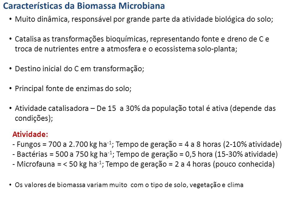 Características da Biomassa Microbiana Muito dinâmica, responsável por grande parte da atividade biológica do solo; Catalisa as transformações bioquímicas, representando fonte e dreno de C e troca de nutrientes entre a atmosfera e o ecossistema solo-planta; Destino inicial do C em transformação; Principal fonte de enzimas do solo; Atividade catalisadora – De 15 a 30% da população total é ativa (depende das condições); Atividade: - Fungos = 700 a 2.700 kg ha -1 ; Tempo de geração = 4 a 8 horas (2-10% atividade) - Bactérias = 500 a 750 kg ha -1 ; Tempo de geração = 0,5 hora (15-30% atividade) - Microfauna = < 50 kg ha -1 ; Tempo de geração = 2 a 4 horas (pouco conhecida) Os valores de biomassa variam muito com o tipo de solo, vegetação e clima