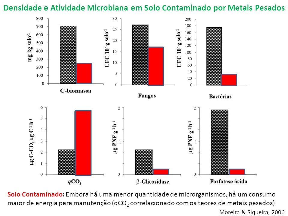 Solo Contaminado: Embora há uma menor quantidade de microrganismos, há um consumo maior de energia para manutenção (qCO 2 correlacionado com os teores de metais pesados) Moreira & Siqueira, 2006 Densidade e Atividade Microbiana em Solo Contaminado por Metais Pesados