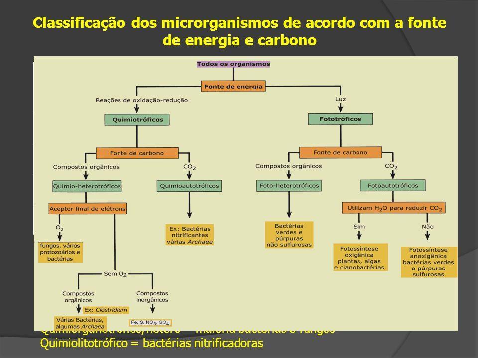 Classificação dos microrganismos de acordo com a fonte de energia e carbono Tipo fisiológicoFonte de EnergiaFonte de Carbono FotoLuz QuimioQuímica Organotrófico/heterotróficoMoléculas orgânicas Autotrófico/litotróficoMoléculas inorgânicas Fotoautotrófico = plantas, cianobactérias, algas verdes Fotoorganotrófico/hetero = bactérias púrpuras, exceto as abaixo Fotolitotróficas = bactérias púrpuras metabolizantes do S Quimioautotrófico = Archaea metanogênicas Quimiorganotrófico/hetero = maioria bactérias e fungos Quimiolitotrófico = bactérias nitrificadoras