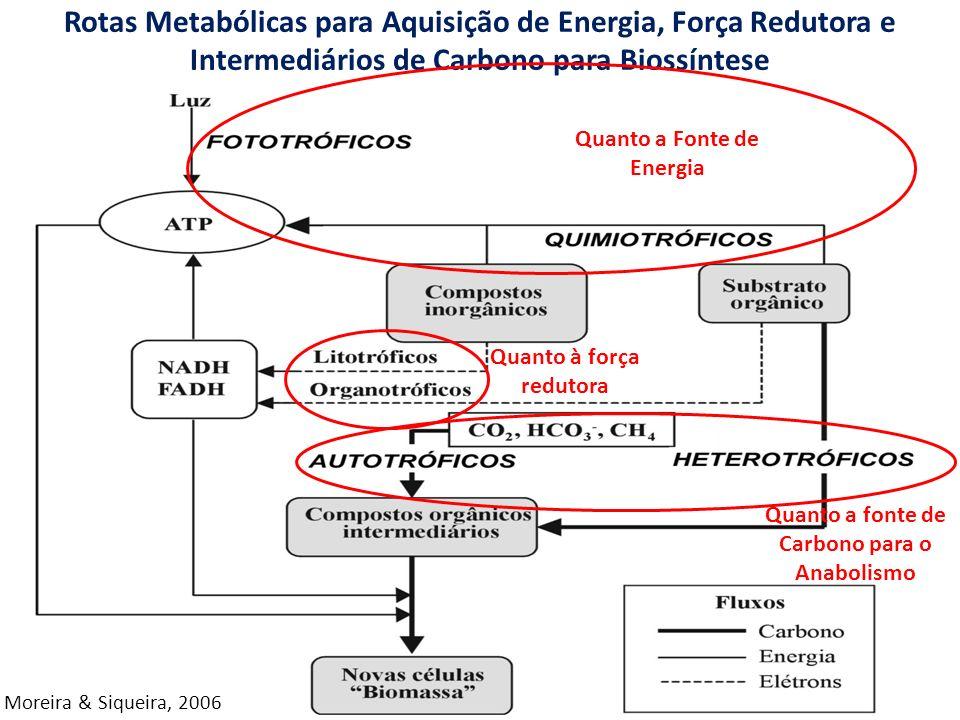 Rotas Metabólicas para Aquisição de Energia, Força Redutora e Intermediários de Carbono para Biossíntese Moreira & Siqueira, 2006 Quanto à força redutora Quanto a Fonte de Energia Quanto a fonte de Carbono para o Anabolismo