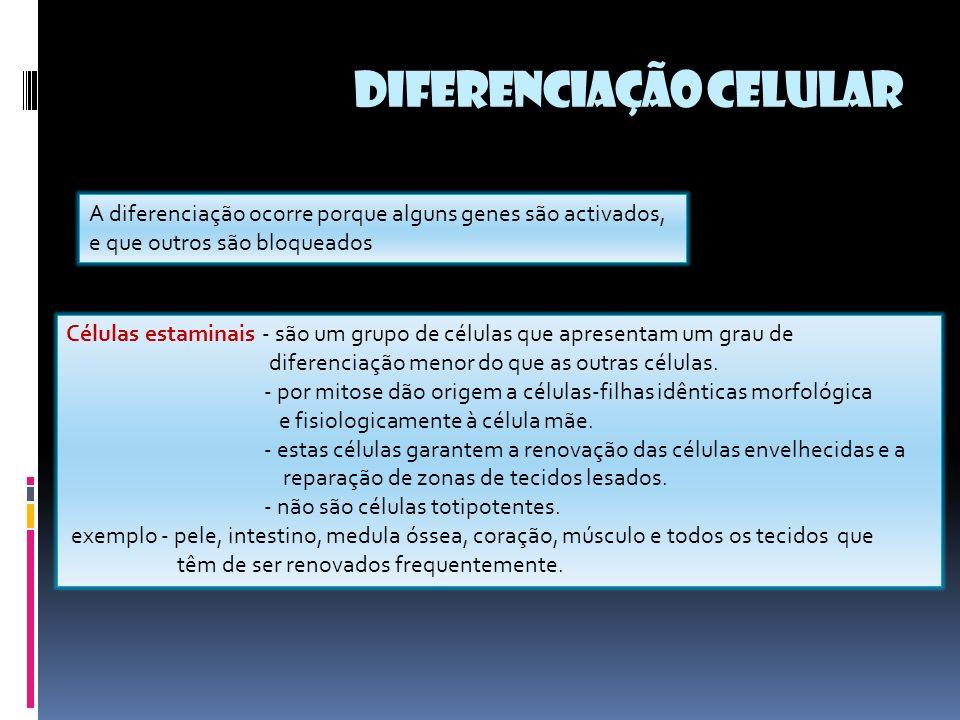 A diferenciação ocorre porque alguns genes são activados, e que outros são bloqueados Células estaminais - são um grupo de células que apresentam um grau de diferenciação menor do que as outras células.
