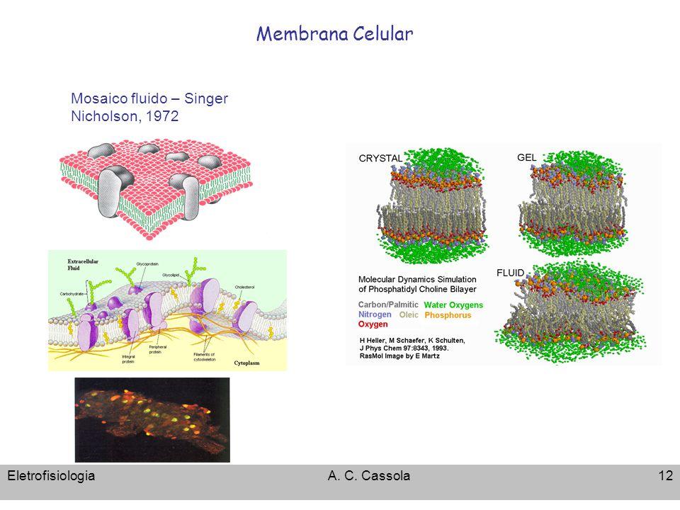 EletrofisiologiaA. C. Cassola12 Membrana Celular Mosaico fluido – Singer Nicholson, 1972