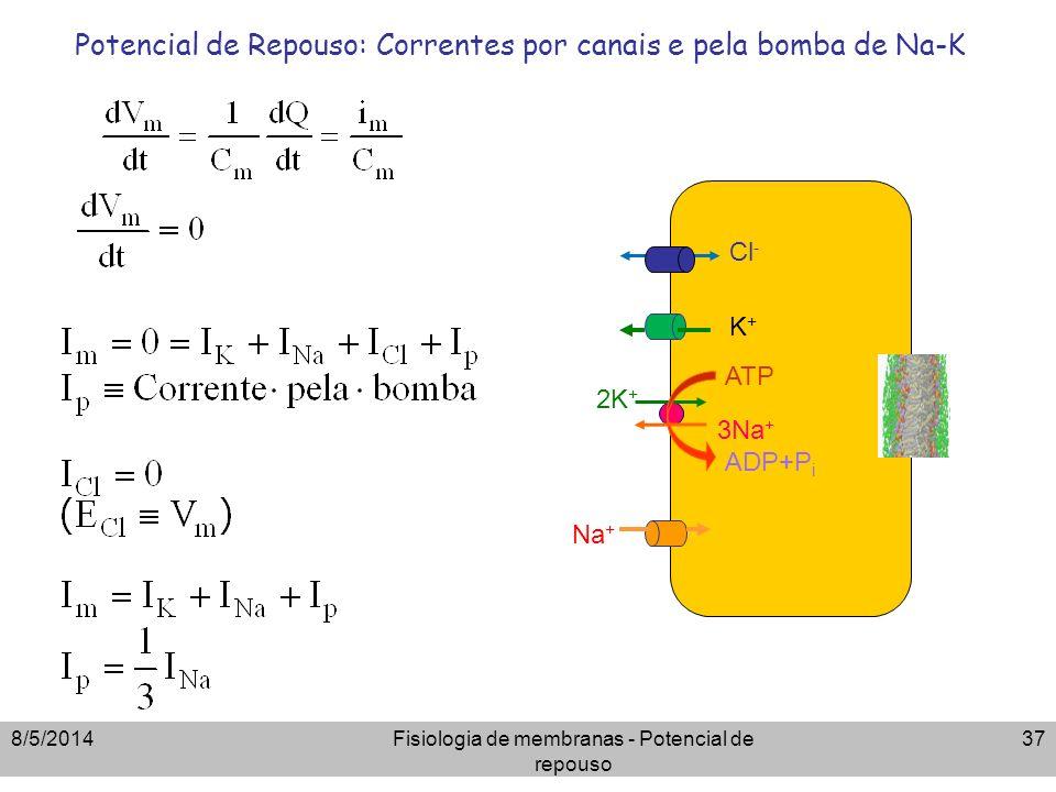 8/5/2014Fisiologia de membranas - Potencial de repouso 37 Potencial de Repouso: Correntes por canais e pela bomba de Na-K ATP 3Na + 2K + ADP+P i Cl -