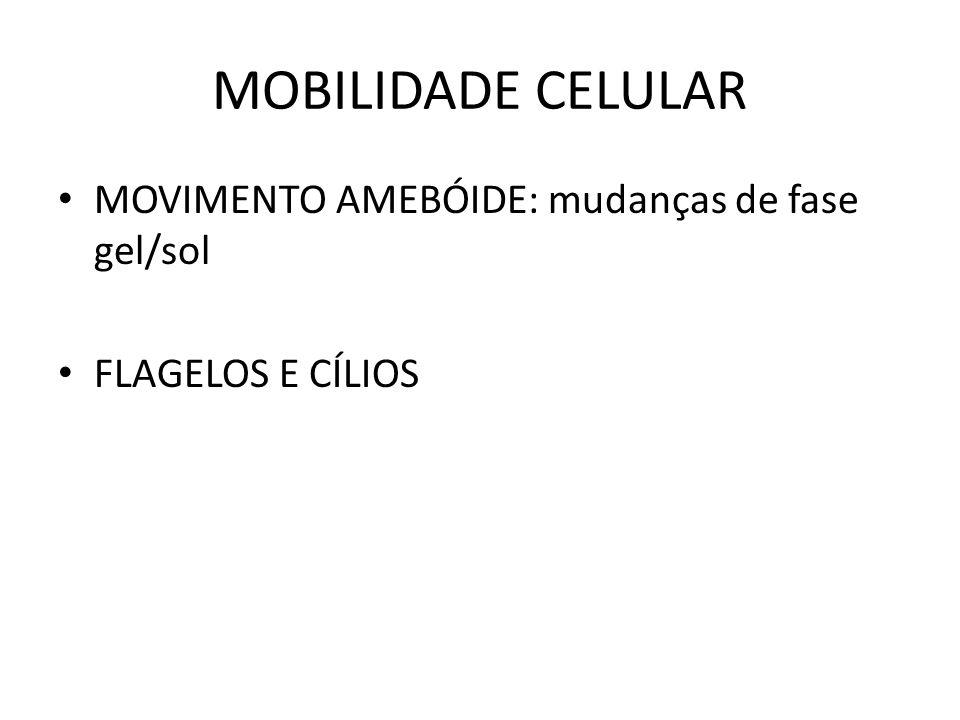MOBILIDADE CELULAR MOVIMENTO AMEBÓIDE: mudanças de fase gel/sol FLAGELOS E CÍLIOS