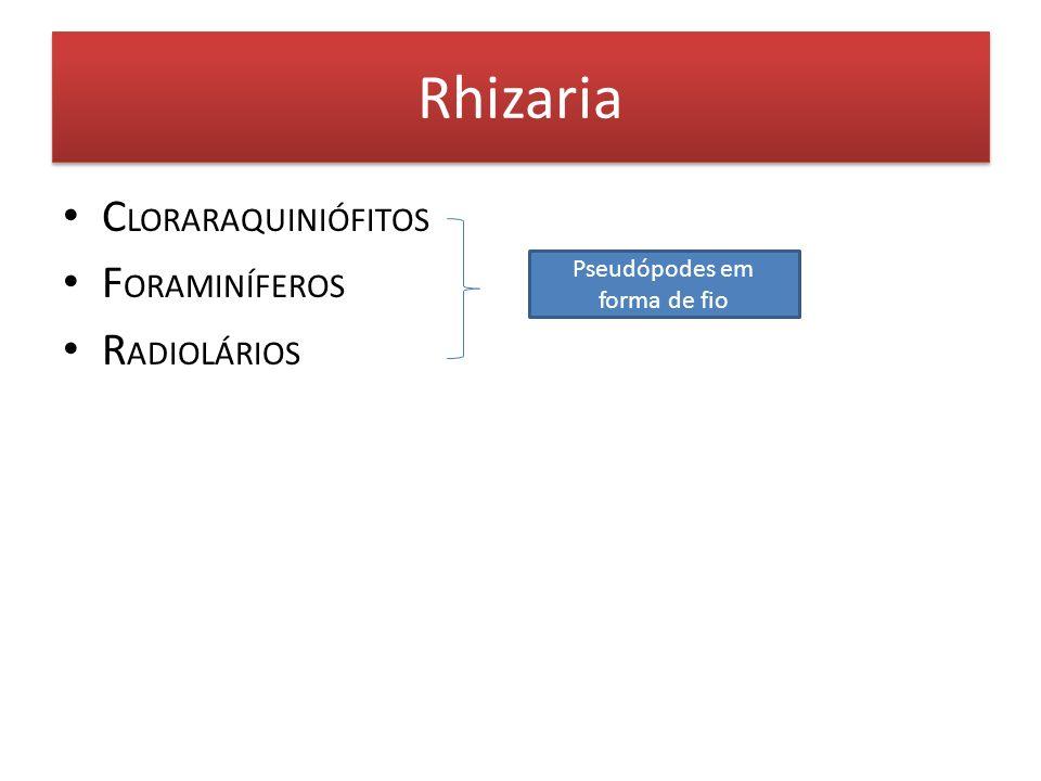 Rhizaria C LORARAQUINIÓFITOS F ORAMINÍFEROS R ADIOLÁRIOS Pseudópodes em forma de fio