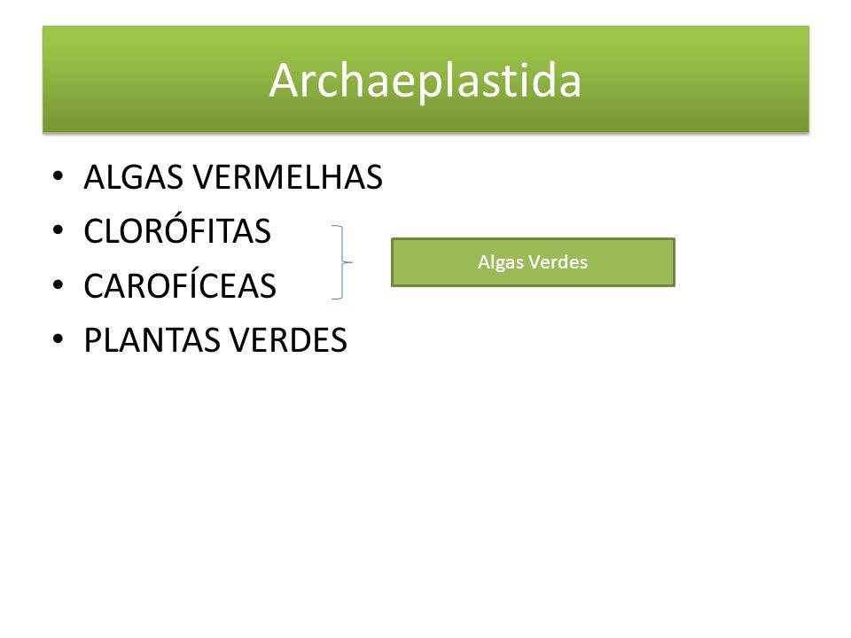 Archaeplastida ALGAS VERMELHAS CLORÓFITAS CAROFÍCEAS PLANTAS VERDES Algas Verdes