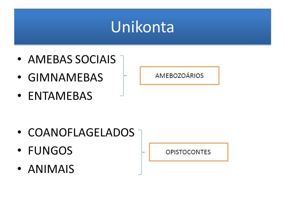 Unikonta AMEBAS SOCIAIS GIMNAMEBAS ENTAMEBAS COANOFLAGELADOS FUNGOS ANIMAIS AMEBOZOÁRIOS OPISTOCONTES
