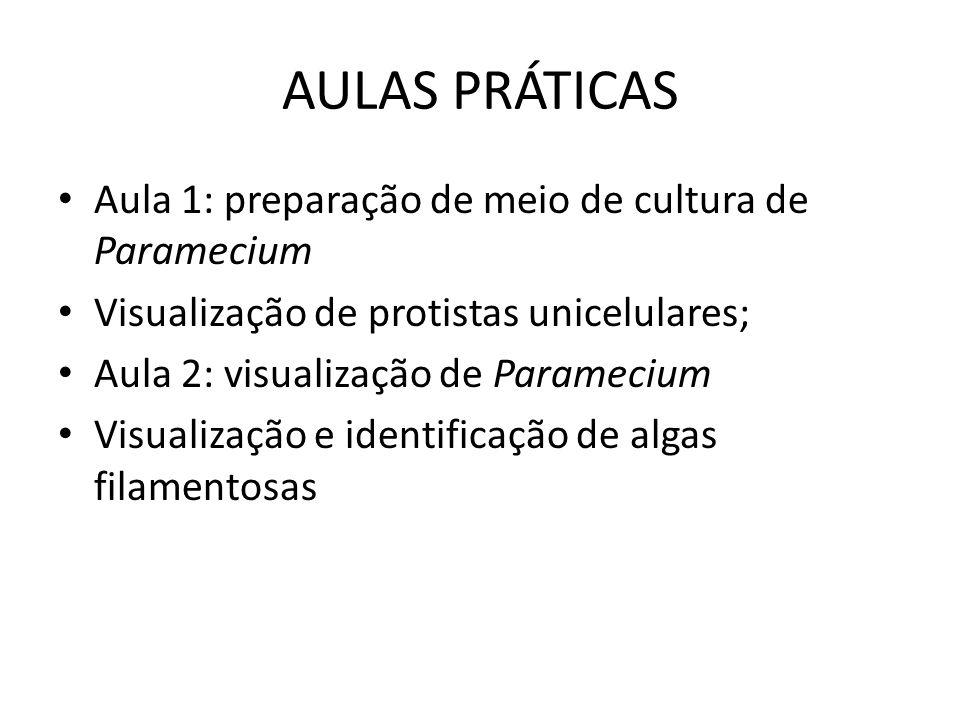 AULAS PRÁTICAS Aula 1: preparação de meio de cultura de Paramecium Visualização de protistas unicelulares; Aula 2: visualização de Paramecium Visualiz