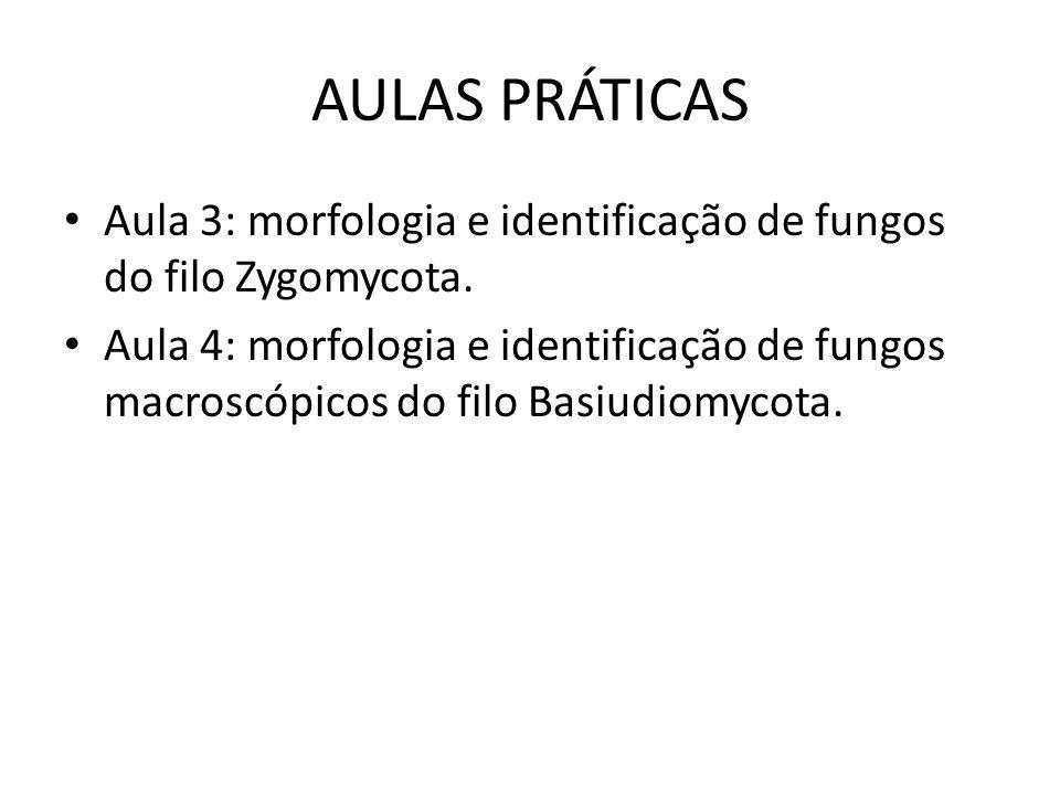 AULAS PRÁTICAS Aula 3: morfologia e identificação de fungos do filo Zygomycota. Aula 4: morfologia e identificação de fungos macroscópicos do filo Bas