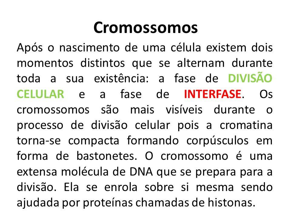 Cromossomos Após o nascimento de uma célula existem dois momentos distintos que se alternam durante toda a sua existência: a fase de DIVISÃO CELULAR e