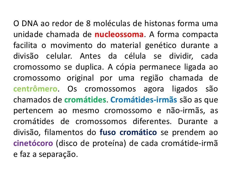O DNA ao redor de 8 moléculas de histonas forma uma unidade chamada de nucleossoma. A forma compacta facilita o movimento do material genético durante