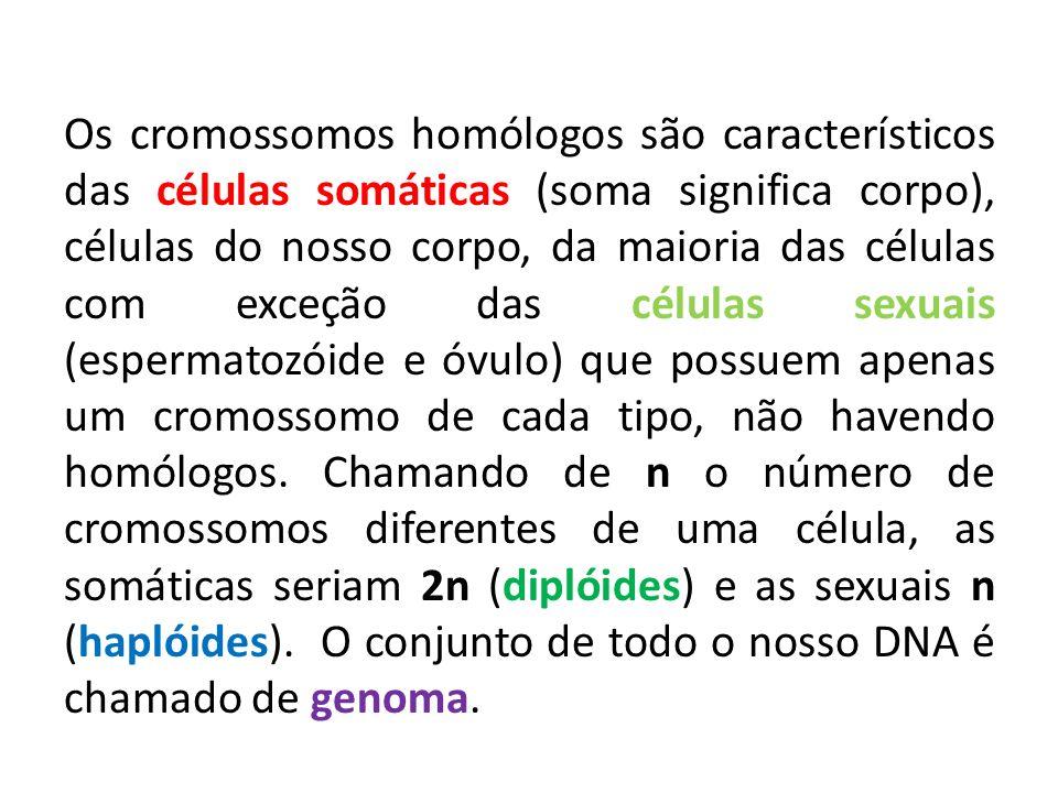 Os cromossomos homólogos são característicos das células somáticas (soma significa corpo), células do nosso corpo, da maioria das células com exceção