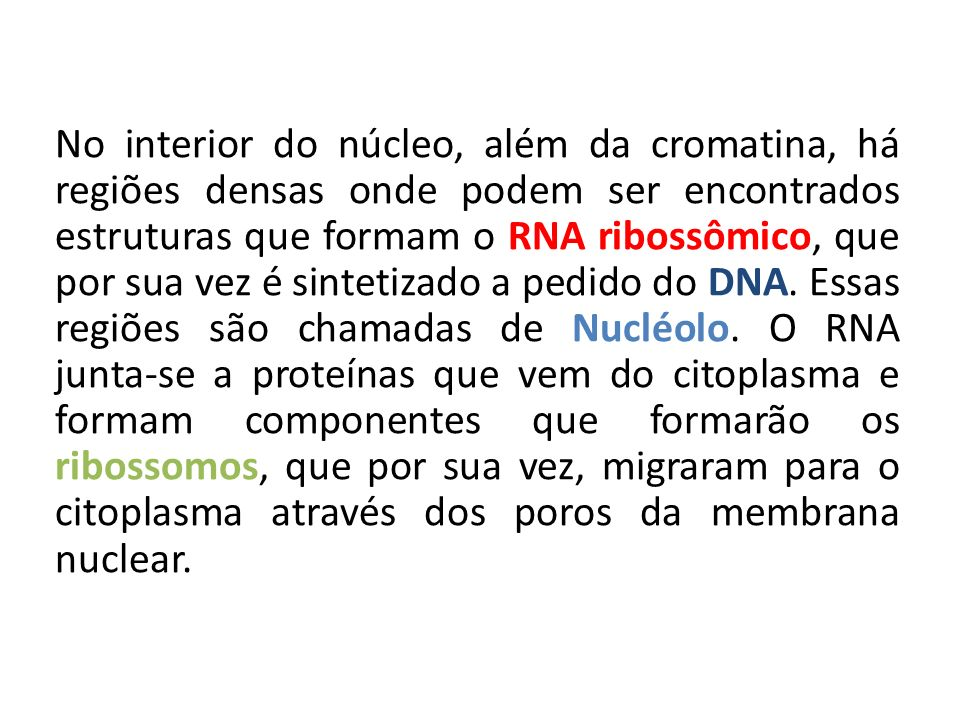 No interior do núcleo, além da cromatina, há regiões densas onde podem ser encontrados estruturas que formam o RNA ribossômico, que por sua vez é sint