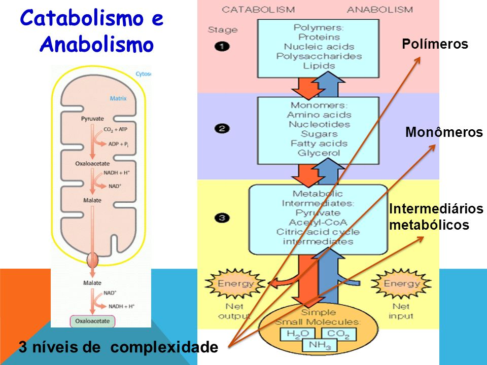 Catabolismo e Anabolismo 3 níveis de complexidade Polímeros Monômeros Intermediários metabólicos