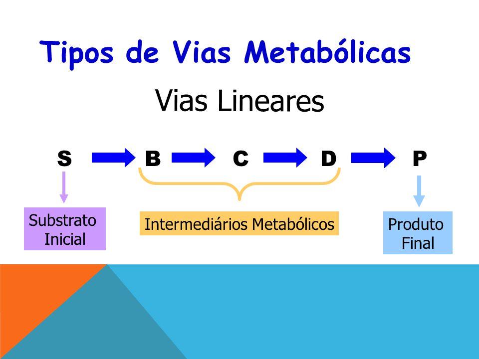 Tipos de Vias Metabólicas SBCDP Vias Lineares Substrato Inicial Intermediários Metabólicos Produto Final