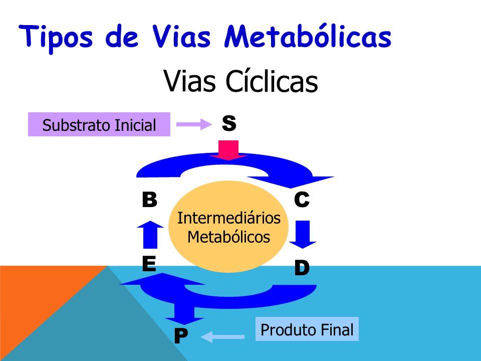 B S C D P E Substrato Inicial Tipos de Vias Metabólicas Vias Cíclicas Intermediários Metabólicos Produto Final