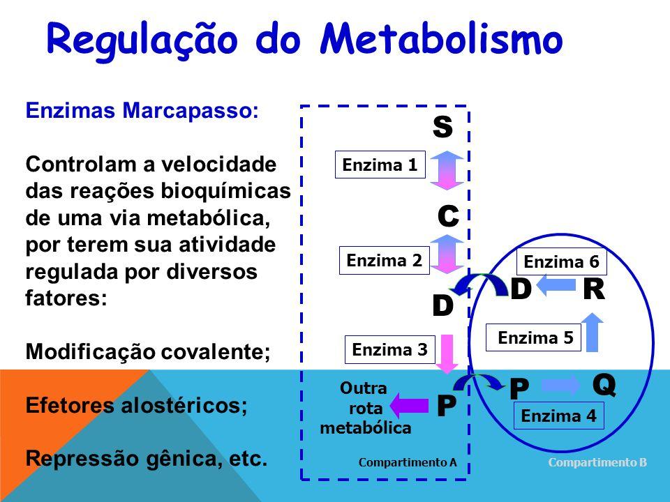 S C D P R Enzima 3 Enzima 2 Enzima 1 Enzima 6 Enzima 5 D Q Enzima 4 P Outra rota metabólica Compartimento ACompartimento B Enzimas Marcapasso: Controlam a velocidade das reações bioquímicas de uma via metabólica, por terem sua atividade regulada por diversos fatores: Modificação covalente; Efetores alostéricos; Repressão gênica, etc.